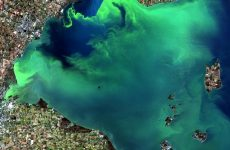 NOAA, researchers predict large summer HAB in Lake Erie