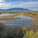 Utah water conservancy district reduces water usage with AMI