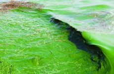 EPA announces research funding to control harmful algal blooms
