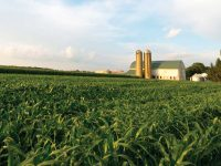Letter to the Editor: A Farming Perspective on Agricultural Nutrient Runoff