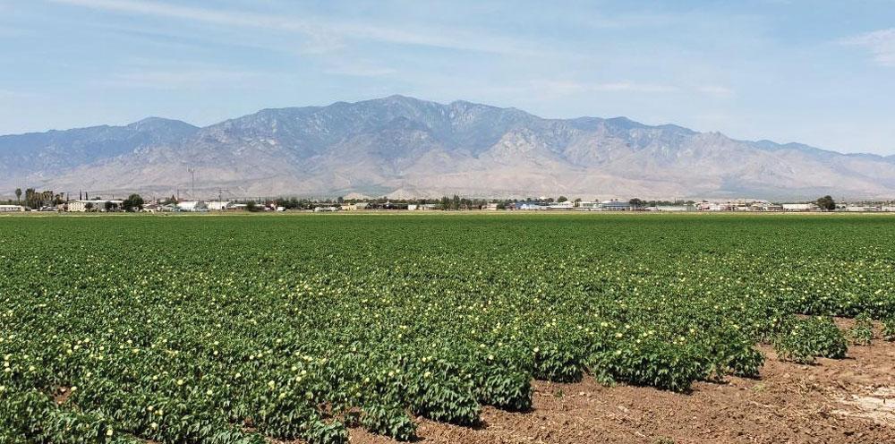 Gila Valley