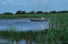 Legal Corner: Where, Oh Where, Will All the Wetlands Go?